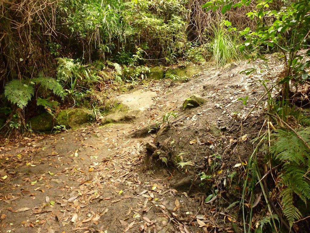 Track towards Dora Creek in the Watagans