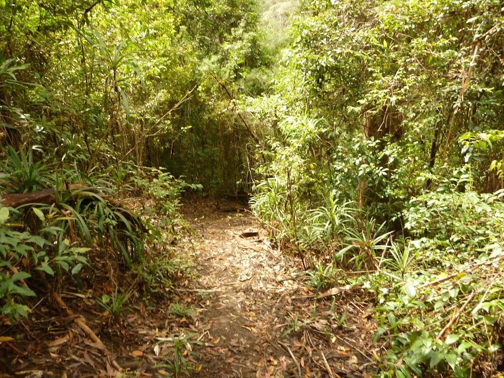 Track near Dora Creek