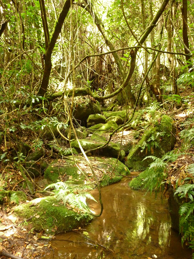 Rocks and rainforest in the Watagans