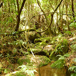 Rocks and rainforest in the Watagans (321266)
