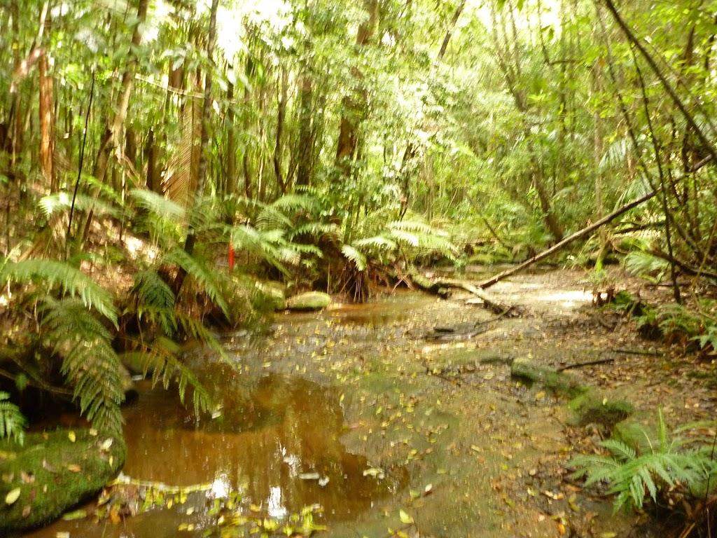 Dora Creek above Abbotts Falls in the Watagans