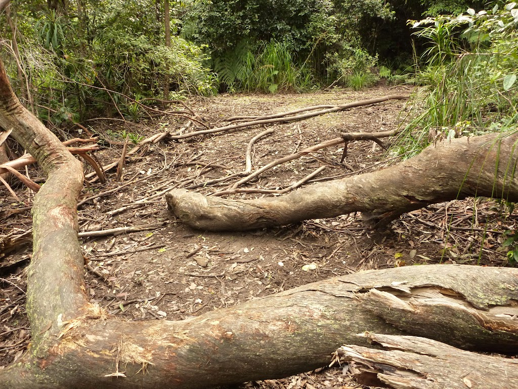 Logs over the track near Abbotts Falls in the Watagans