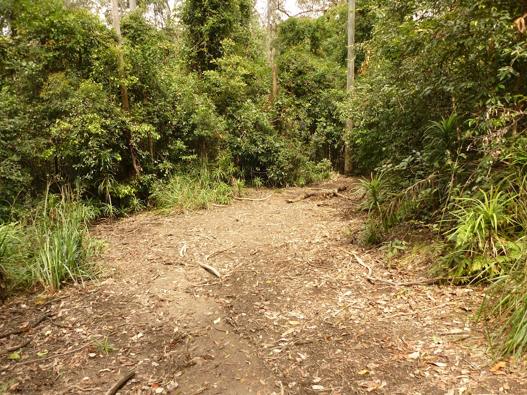 Management trail in the Watagans