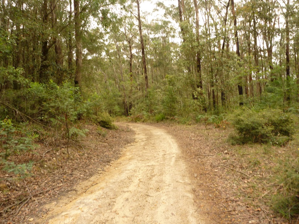 German Point Rd in the Watagans (321842)
