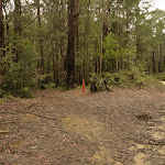 German Point Rd near Watagan Forest Rd in the Watagans (321872)