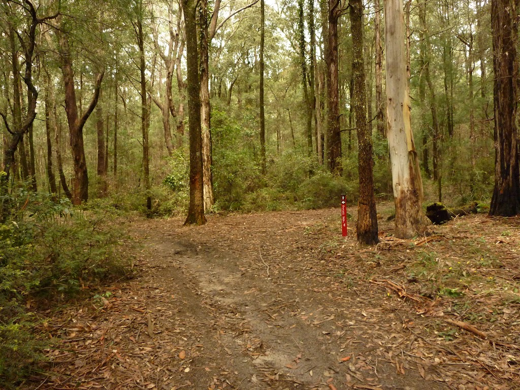 Track intersection near Casuarina campsite in the Watagans