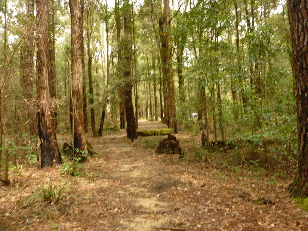 Track to Casuasina campsite in the Watagans (321935)