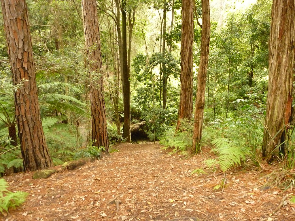 Track down to the creek near Turpentine campsite in the Watagans