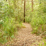 Track in the Watagans