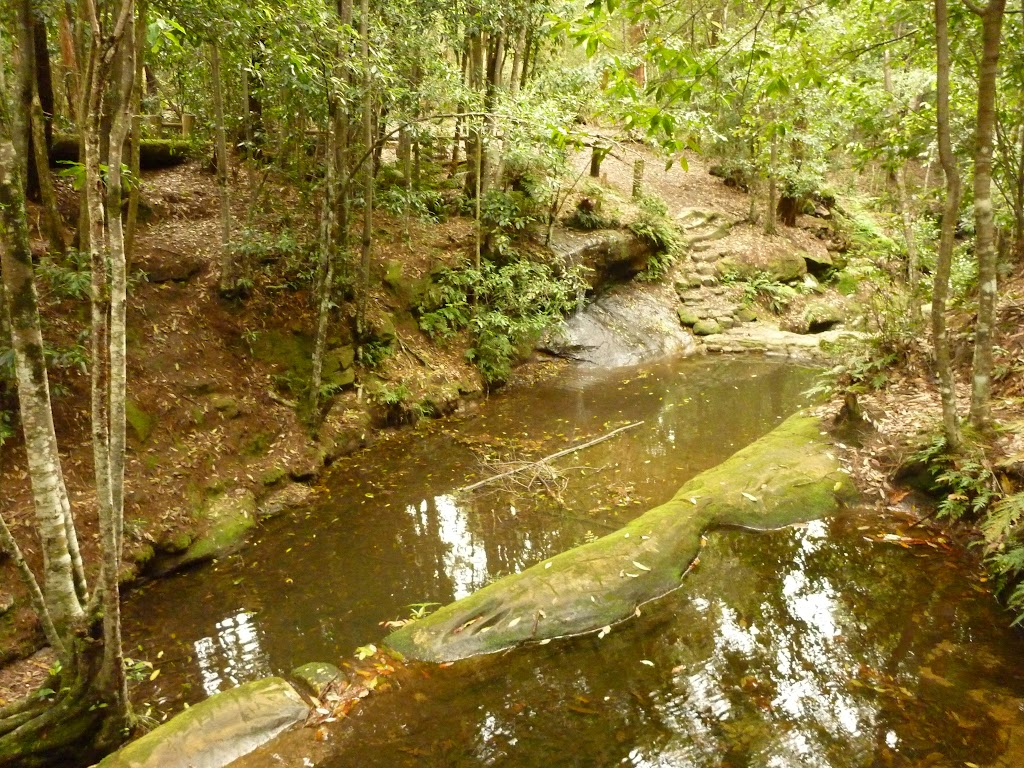 Dammed pool on the Pines walking track in the Watagans
