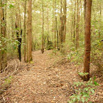 Track through forest in the Watagans (322250)
