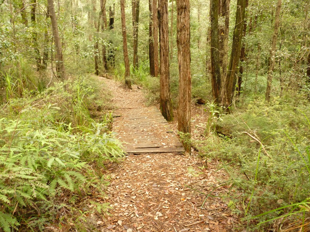 Track over old timber footbridge in the Watagans (322274)