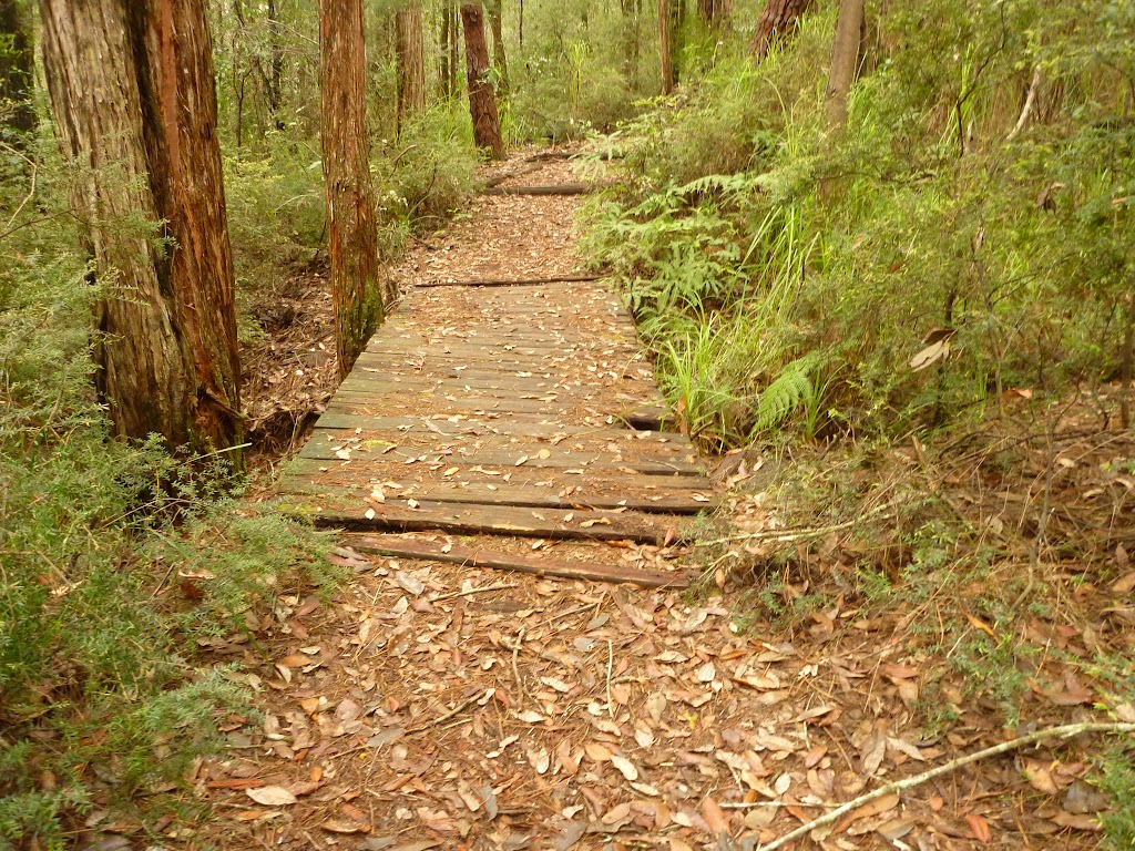 Track over old timber footbridge in the Watagans