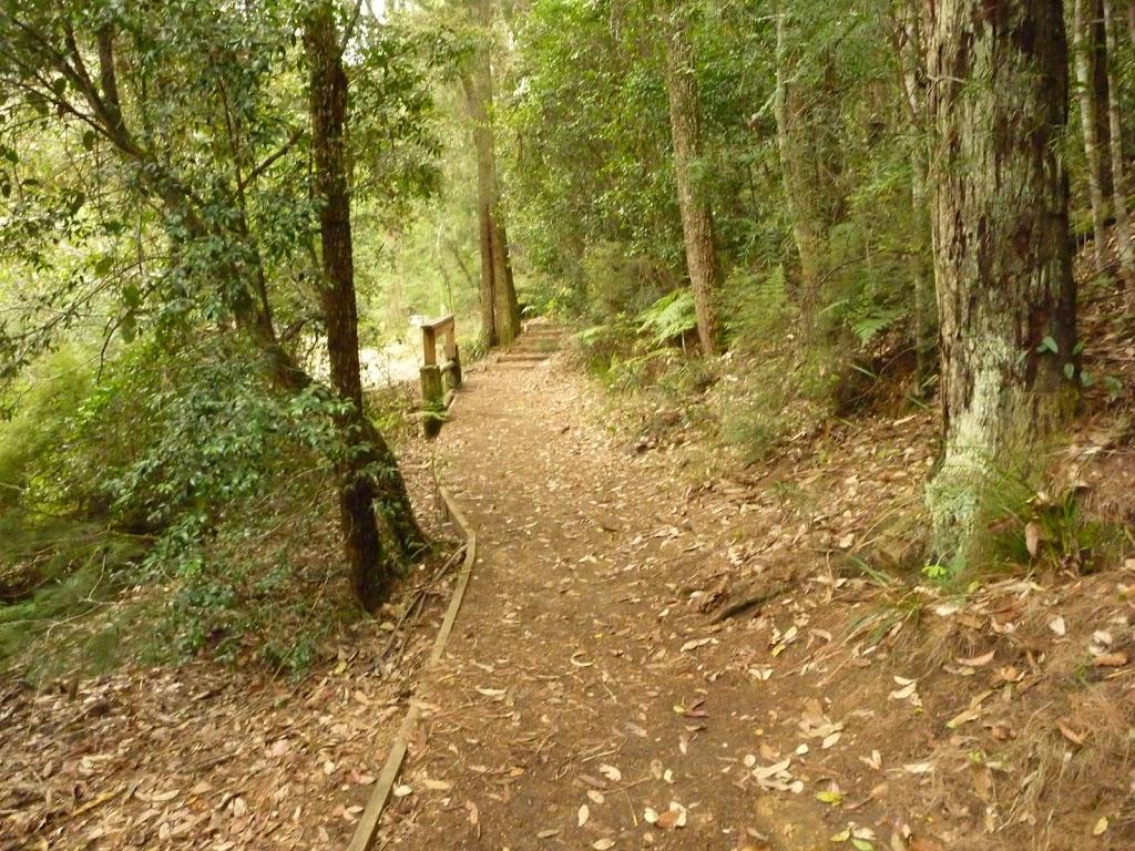 Track near Boarding House Dam near Watagan Forest Rd