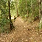 Track near Boarding House Dam near Watagan Forest Rd (322526)