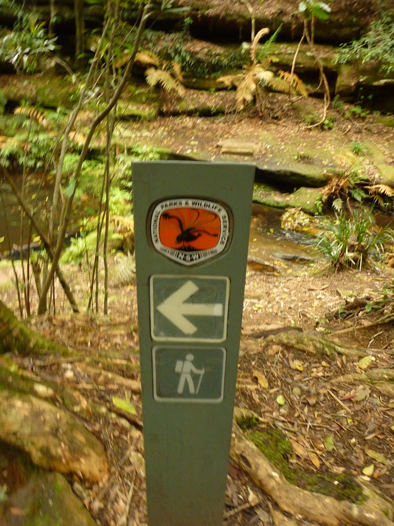 Timber track marker near the Moss Wall in the Watagans