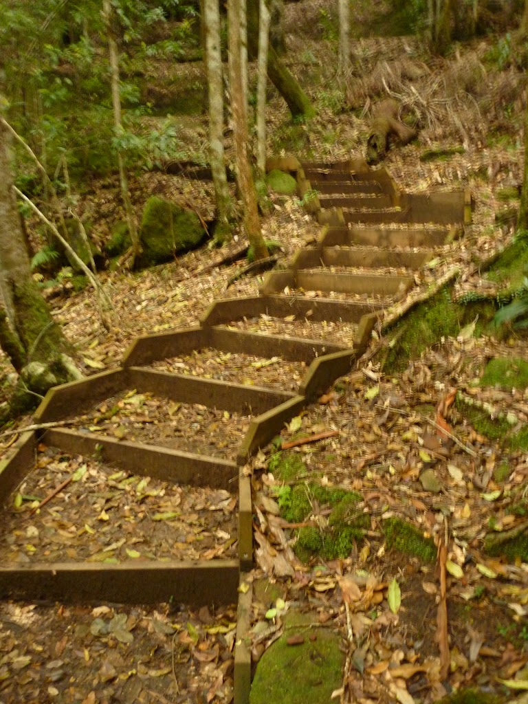 Timber steps close to Moss Wall, near the Boarding House Dam in the Watagans