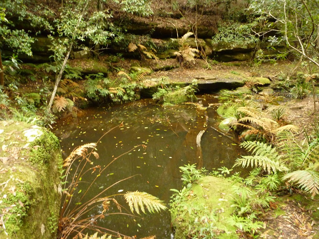 Pool of water near the Moss Wall in the Watagans