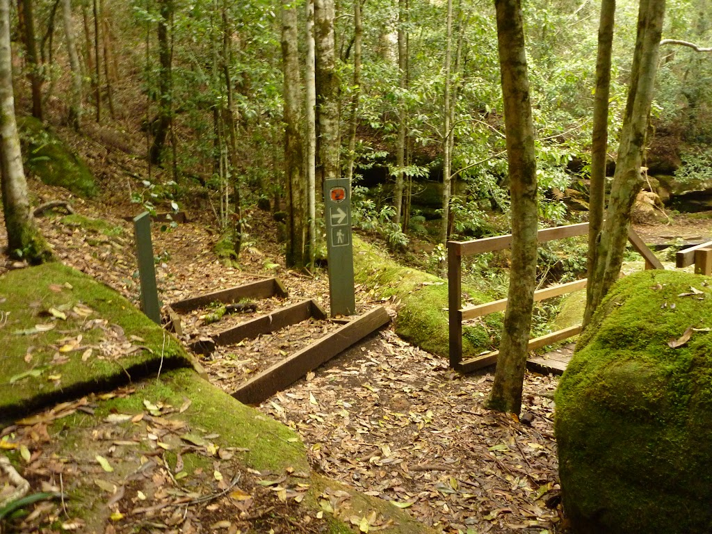 Timber steps and bridge near the Moss Wall in the Watagans