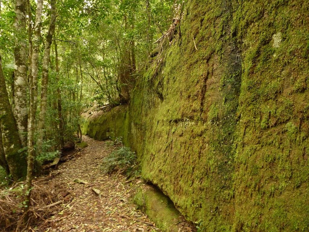 Moss Wall near Boarding House Dam in the Watagans
