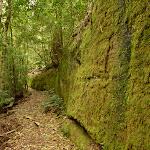 Moss Wall near Boarding House Dam in the Watagans (322718)
