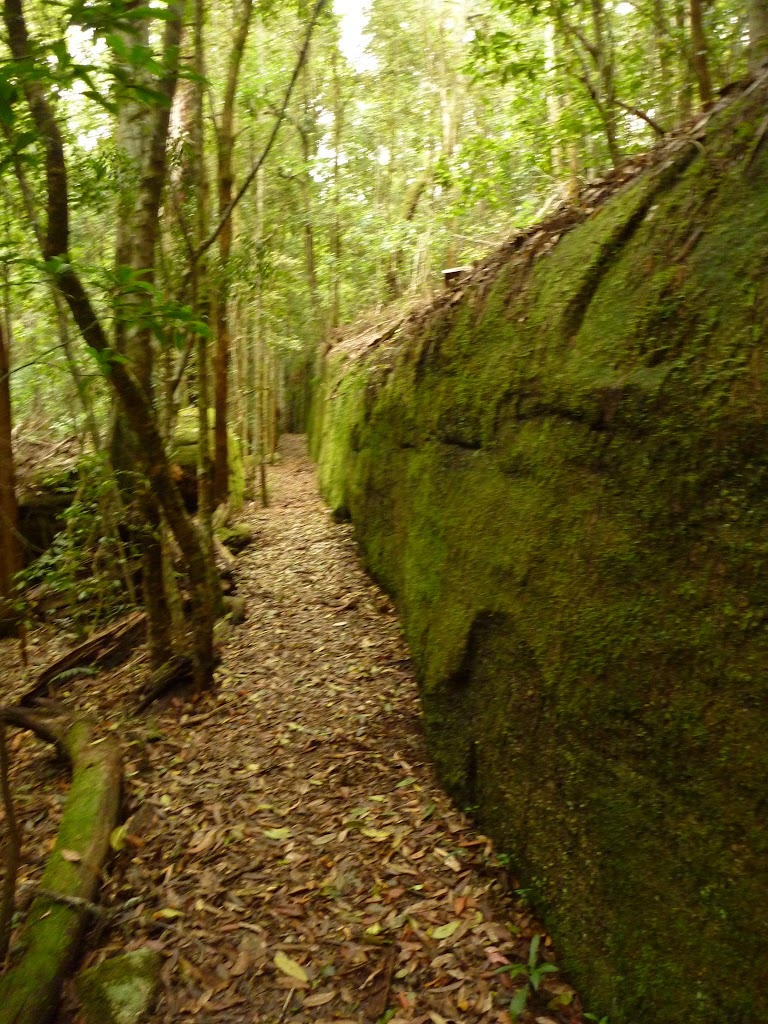 Moss Wall near the Boarding House Dam in the Watagans (322727)
