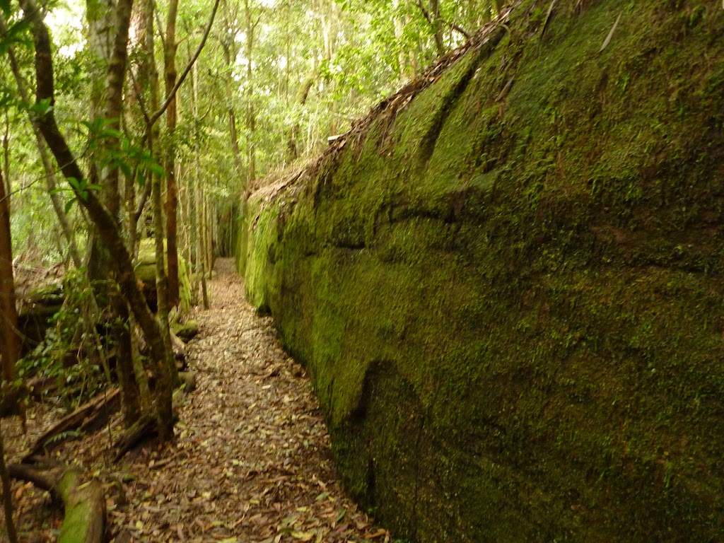Moss Wall near the Boarding House Dam in the Watagans (322730)