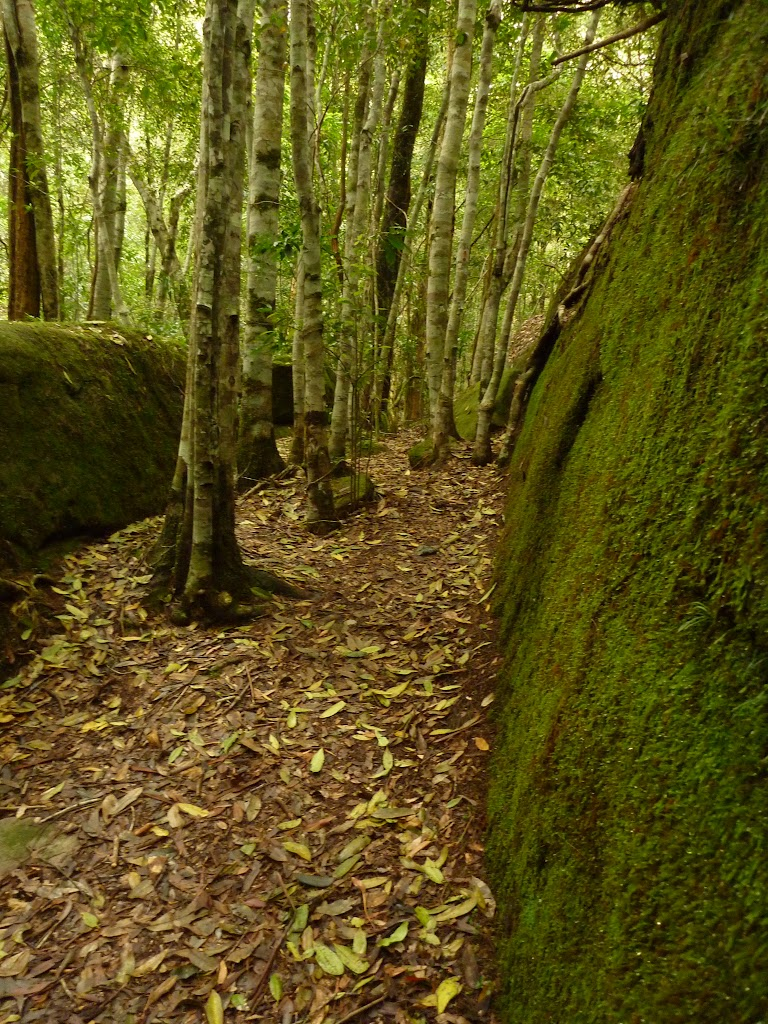 Moss Wall near the Boarding House Dam in the Watagans
