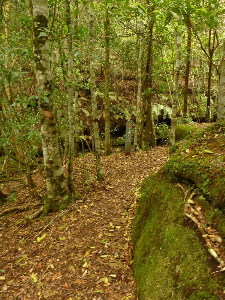 Moist forest near the Moss Wall in the Watagans