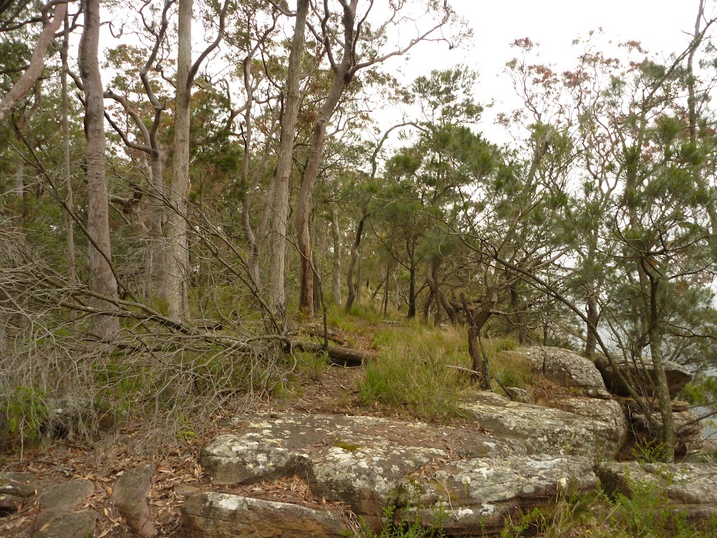 Rocks and forest near Gap Creek Viewpoint in the Watagans