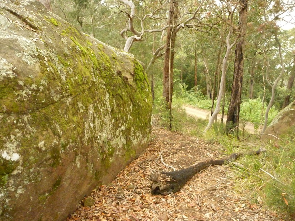 Track and rock near Gap Creek Viewpoint in the Watagans