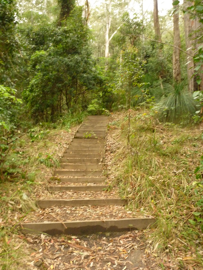 Timber steps leaving the Gap Creek picnic area in the Watagans (323198)