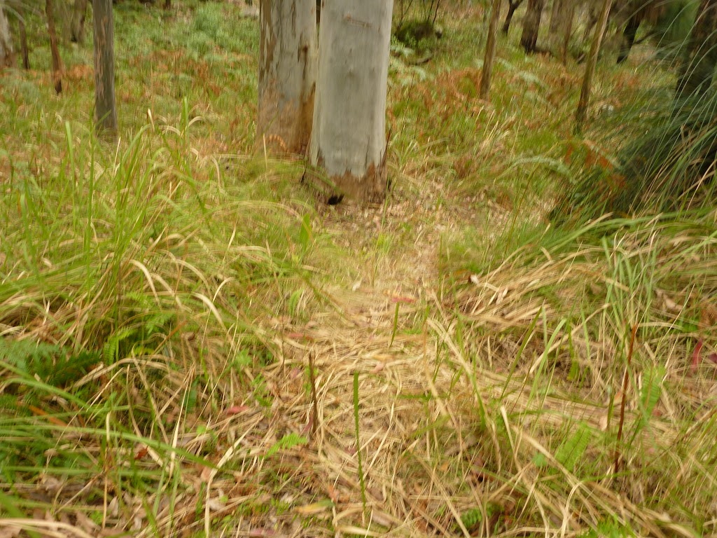 Track in forest near Monkey Face cliff in the Watagans