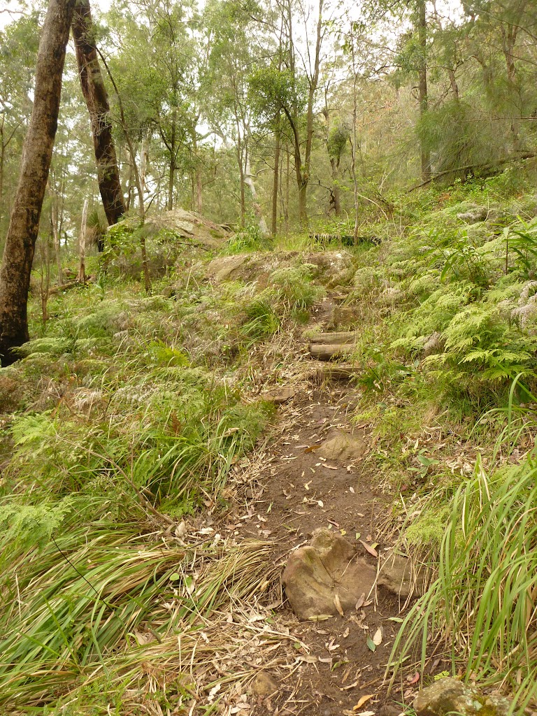 Steep track and timber steps near Monkey Face cliff in the Watagans