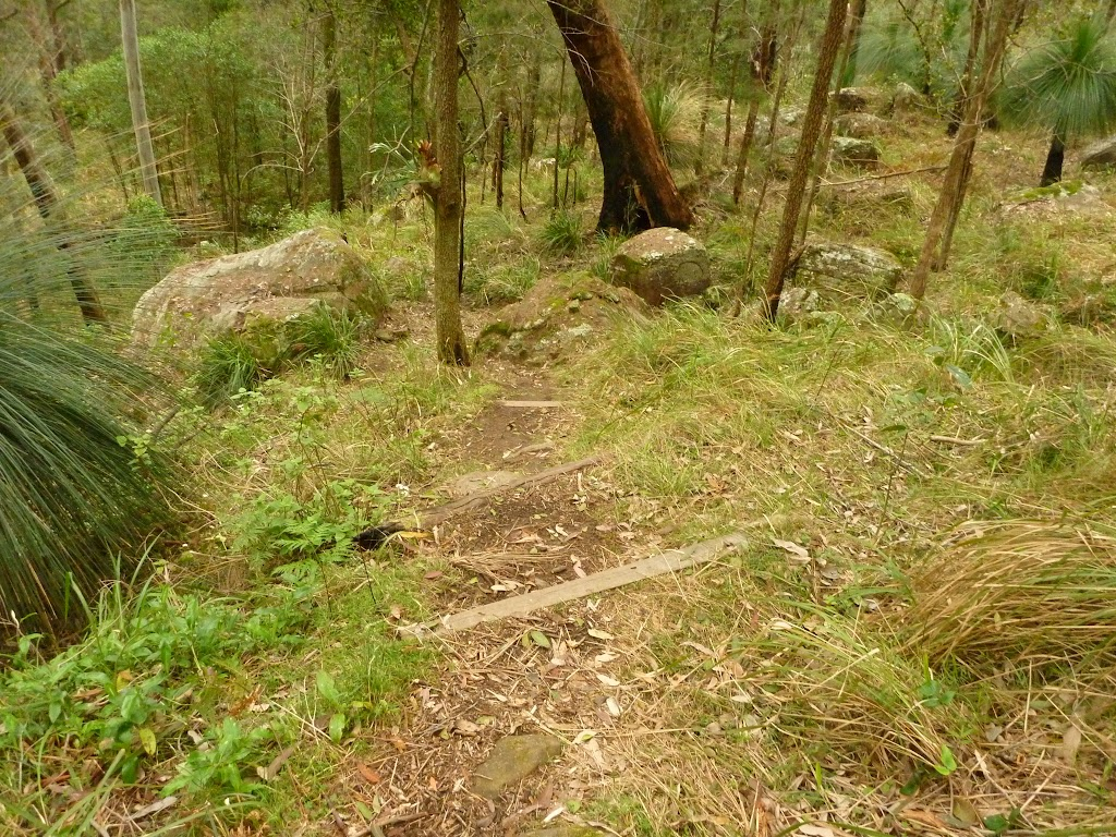 Timber steps near Monkey Face cliff near Bangalow campsite in the Watagans (323327)