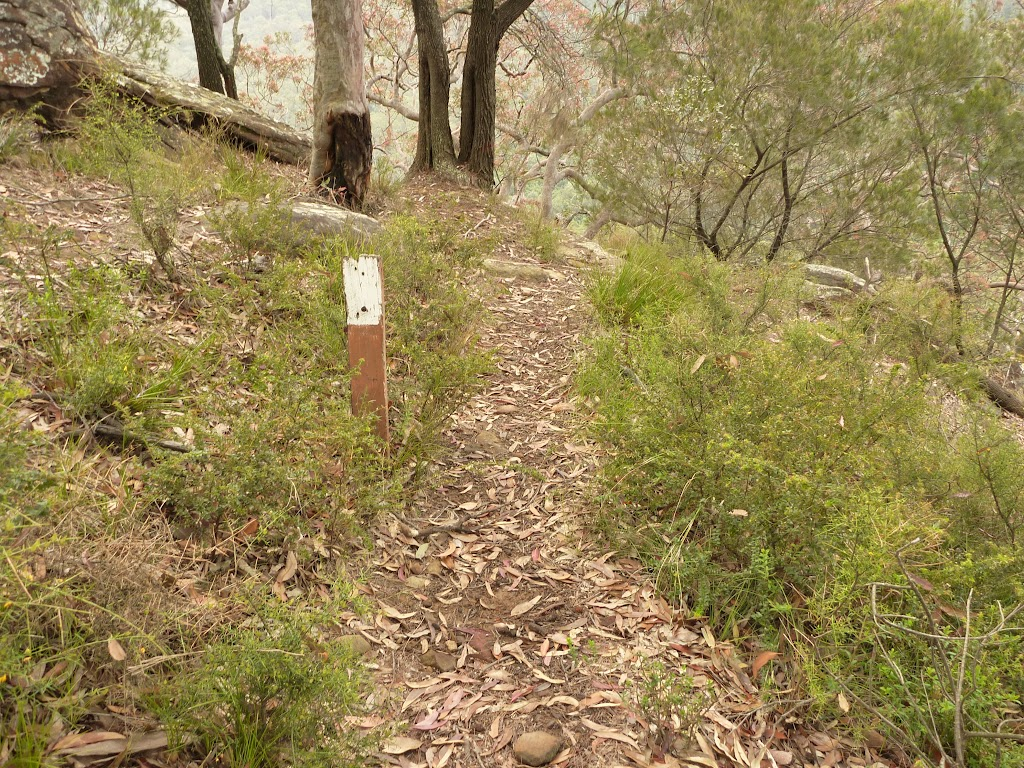 Track and track marker near Gap Creek viewpoint in the Watagans (323582)