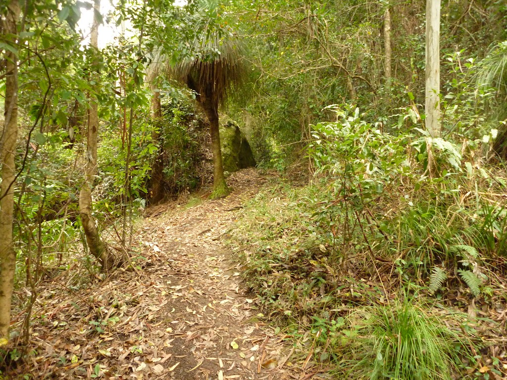 Track and forest near Gap Creek picnic area in the Watagans