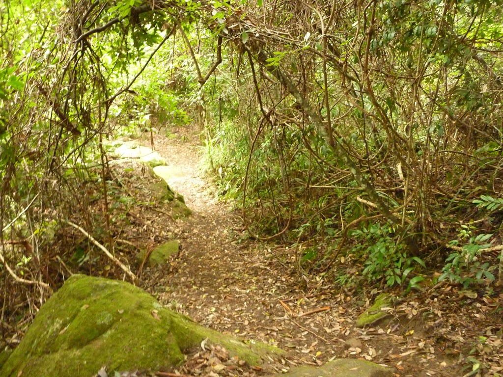 Track near Gap Creek picnic area in the Watagans