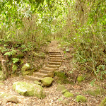 Steps near Gap Creek picnic area in the Watagans (323618)