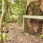 Sign to Gap Creek Falls near Gap Creek picnic area in the Watagans (323657)