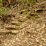 Stone steps on the track to Gap Creek Falls in the Watagans