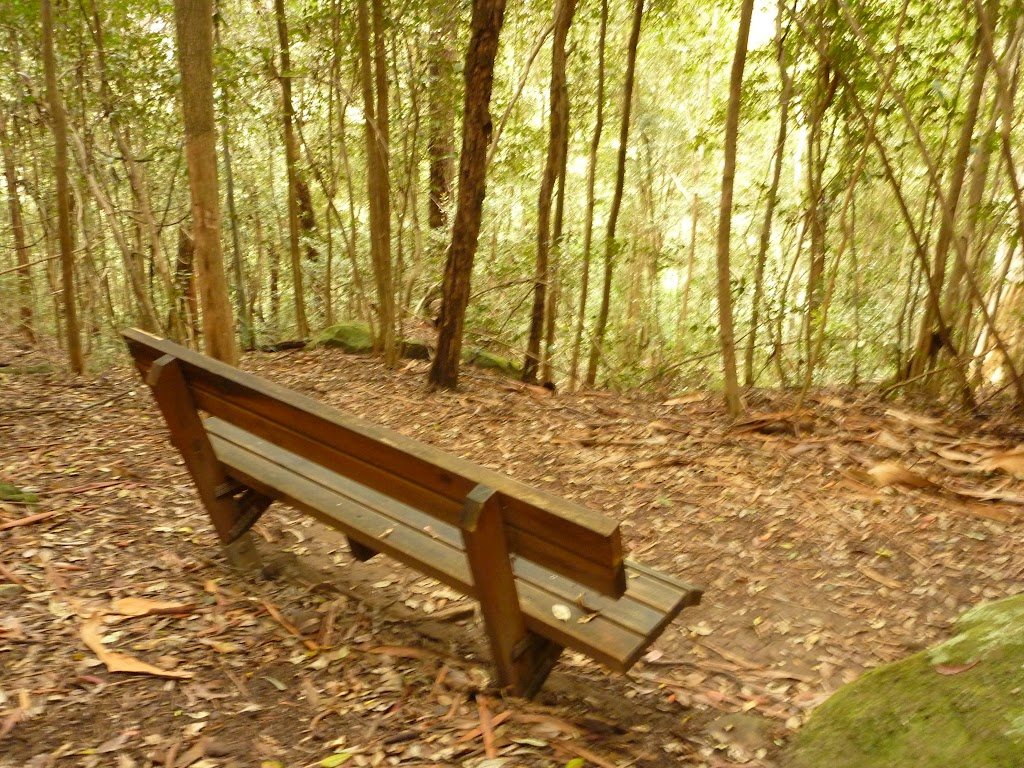 Timber seat on the track to Gap Creek Falls in the Watagans