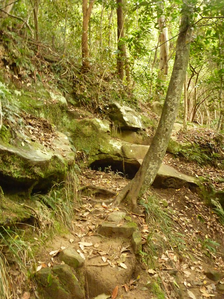 Rocky stepped track on the way to Gap Creek Falls in the Watagans