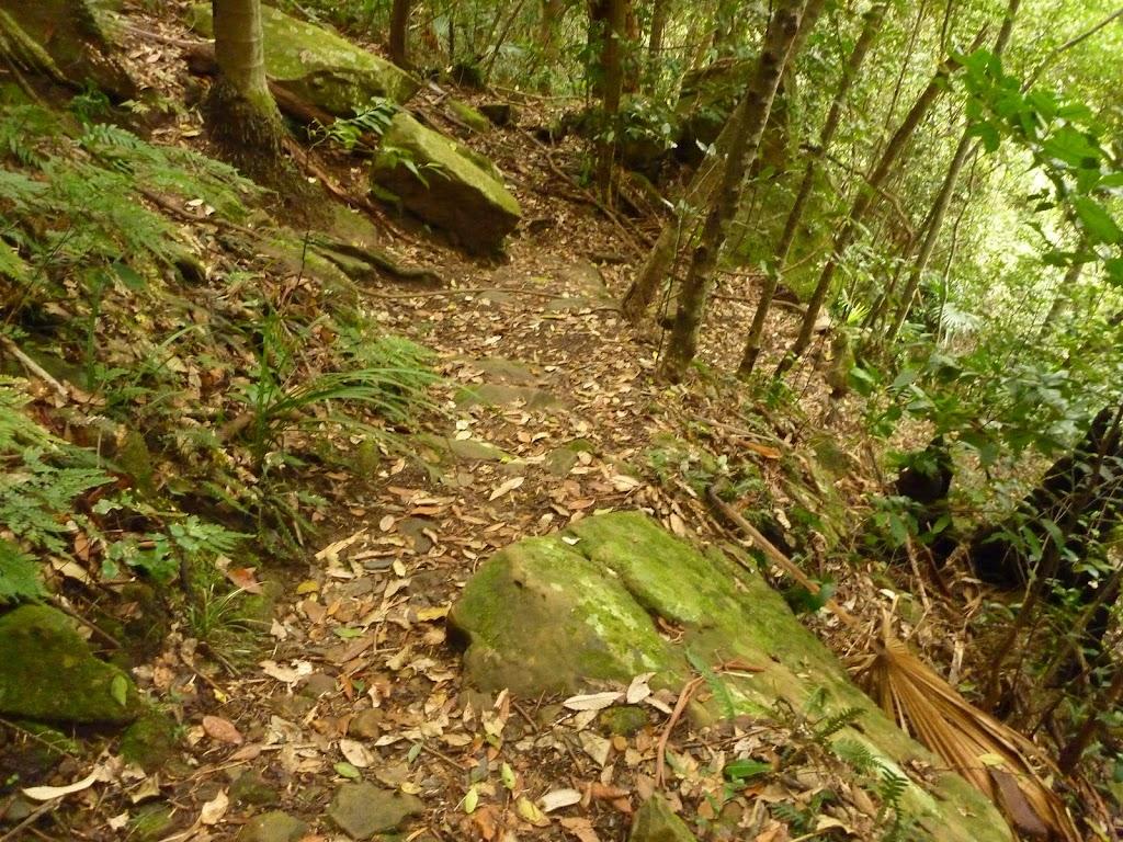 Track near Gap Creek Falls in the Watagans