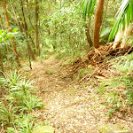 Forested track near the Gap Creek Falls in the Watagans