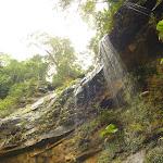 Gap Creek Falls in the Watagans (323789)
