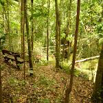 Timber step overlooking Gap Creek in moist rainforest  (323975)