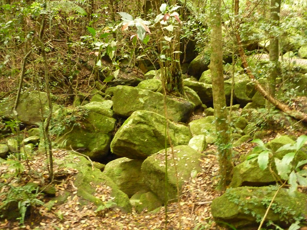 Large rocks in creek by moist rainforest in the Watagans (323978)