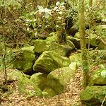 Large rocks in creek by moist rainforest in the Watagans (323978)