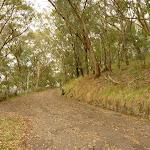 Steep trail to Mt Sugarloaf summit near Newcastle (324110)